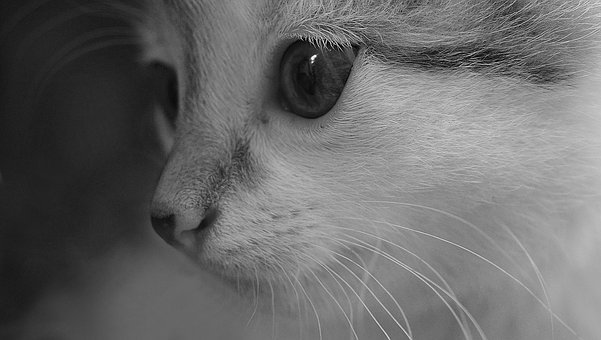 Cat, Animal, Love, Pet, Care, Happy, Together, Kitten