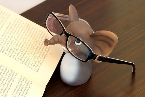 Elephant, Glasses, Reading Glasses, Read, Book, Lenses