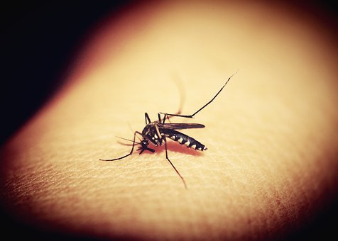 Mosquitoe, Mosquito, Malaria, Gnat, Bite, Insect, Blood