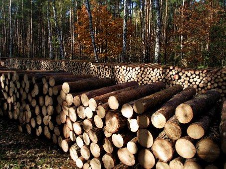 Wood, Autumn, Sawn Timber, Sunny, Pile Of Wood