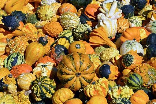 Pumpkin, Gourd, Autumn, Thanksgiving, Decoration