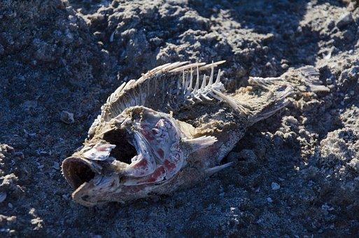 Bones, Fish, Dead, Sea, Salton Sea, Ocean, Death, Water