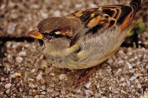 Sparrow, Bird, Small, Cute, Nature, Plumage, Young