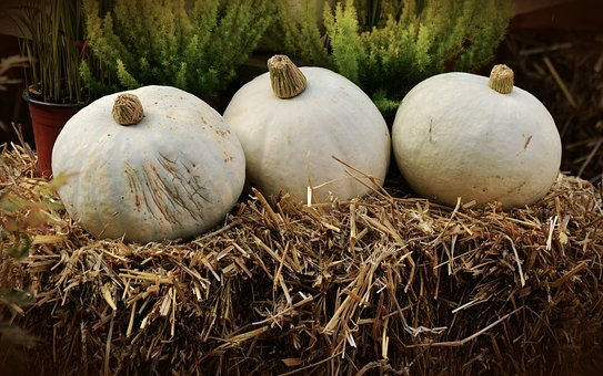 Pumpkin, White Pumpkin, Casper, Squash, Vegetables