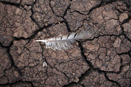 Drought, Mud, Feather, Dry, Nature, Warming, Weather