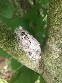 Tree Frog, Frog, Branch, Animal In Tree, Tree