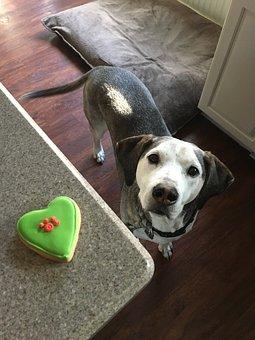 Dog, Treat, Dog Cookie, Cute, Pet