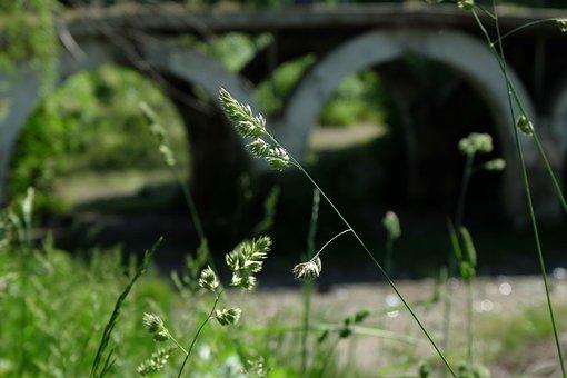 Bridge, Under The Bridge, Focus, Summer, The Abandoned