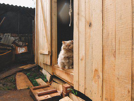 Cat, Barn, Tree, Red-headed Cat, Peach, Homeless