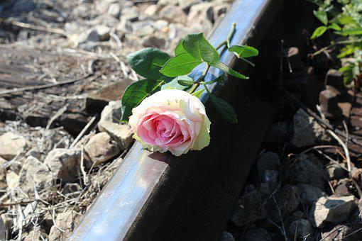 Stop Teenager Suicide, White Pink Rose, Railway