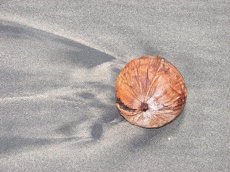 Coconut, Beach, Sand, Summer, Tropical, Sea, Travel