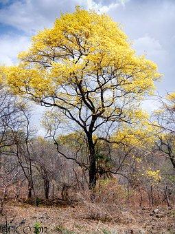 Araguaney, Venezuela, Landscape