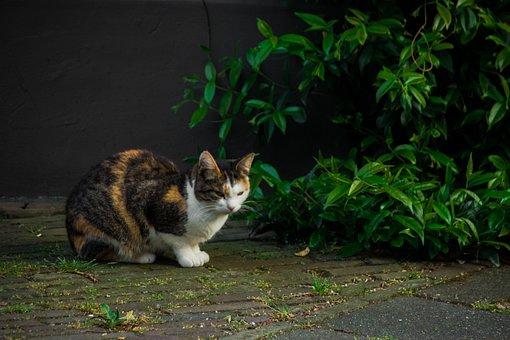 Cat, Felis Catus, Felis, Felidae, Animals, Plants