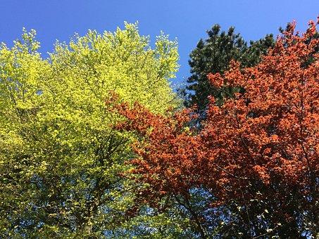 Beech, Colours, Season, Spring, Foliage, Colorful