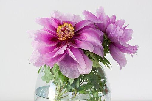 Peony, Pentecost, Nature, Spring, Blossom, Bloom