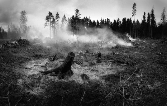 The Forest Fell, Fire, Smoke, Tree, Wildfire