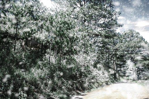 Study, Winterfall, Snow