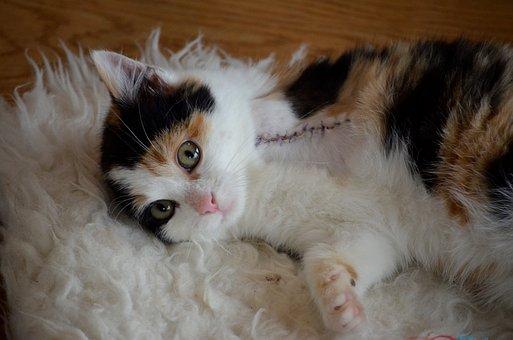 Animal Welfare, Handicap, Cat, Poor Cat, Three Legs