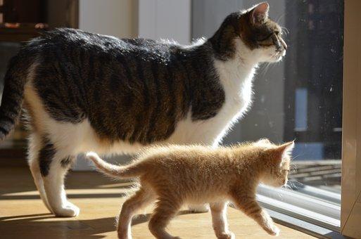 Odd Couple, Cat, Kitten, Friends, Big Brother