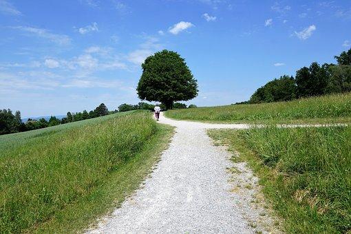 Zollikon, Landscape, Nature, Switzerland, Canton