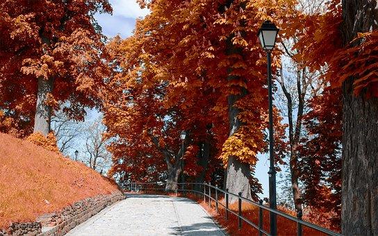 Peremyshl, Poland, Europe, City, Bridge, Street, Car