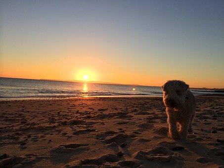 Christchurch, Dorset, Sunset, Lakeland, Terrier, Beach