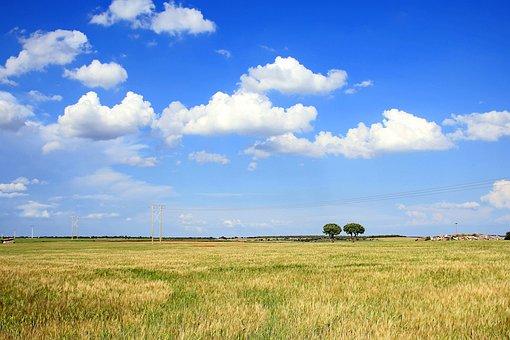 Field, Nature, Clouds, Sky, Landscape, Flowers, Park