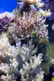 Coral, Water, Color, Stones, Aquarium, Sea, Fish, Reef
