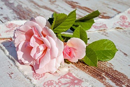 Roses, Pink Roses, Flowers, Romance, Romantic, Love