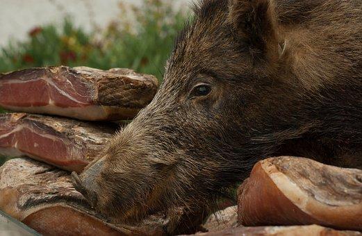 Wild Boar, Delicatessen, Hunting, Ham, Game