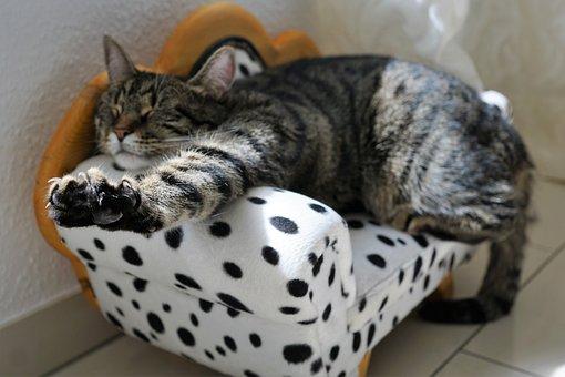 Cat, Mieze, Cat's Eyes, Pride, Kitten, Grey, Mackerel
