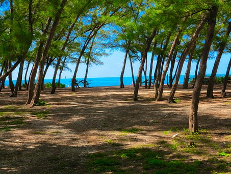 Beach, Tree, Landscape, Sand, Nature, Rest, Holiday