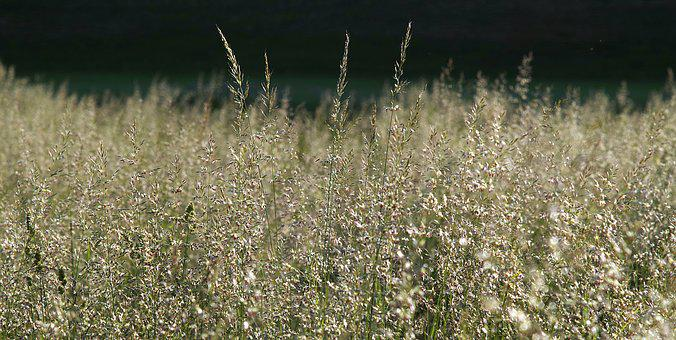 Grass, Meadow, Blooms, Flowers, The Background, Dark