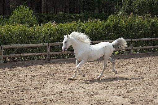 Horse, White, Beautiful, Barn, Animal, Nature