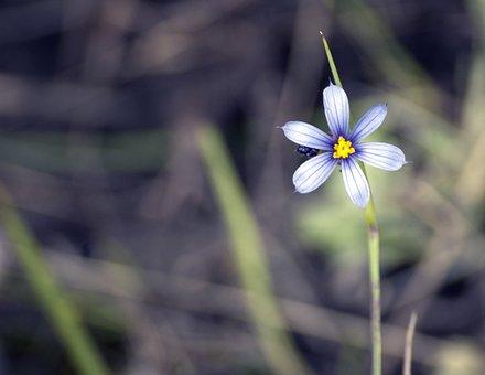 Flower, Wildflower, Nature, Peaceful, Quiet, Pretty