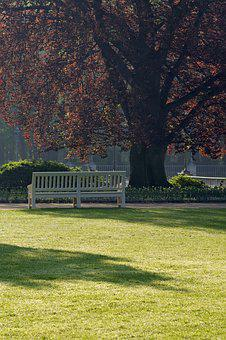 Tree, Bench, Park, Shadow, Rest, Relaxation, Foliage