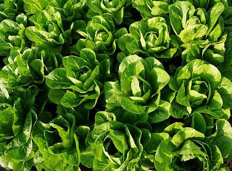 Salad, Green, Eat, Frisch, Vitamins, Healthy
