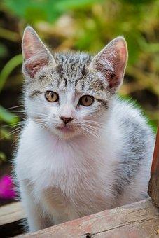 Cat, Feline, Pussycat, Gata, Animal, Pets