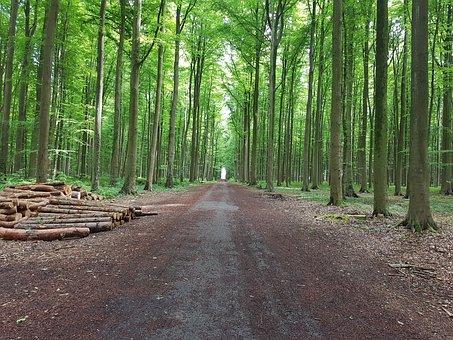 Forest, Green, Nature, Landscape, Tree, Natural