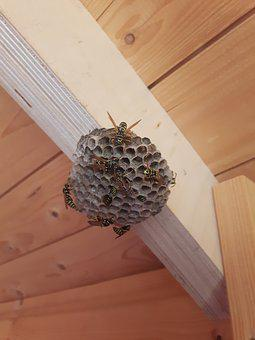 Wasps, The Hive, Garden, Garden Shed