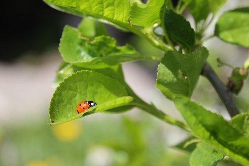 Of God, Ladybug, Greens