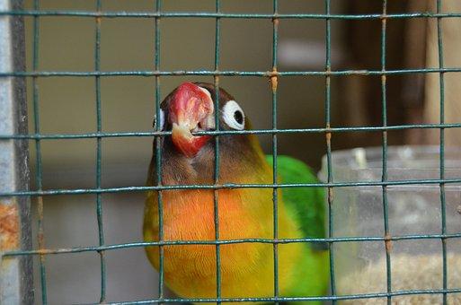 Bird, Cage, Love Bird