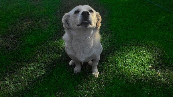 Dog, Coat, Doggy, Pet, Puppy, Zwierząto, Animal, Dogs