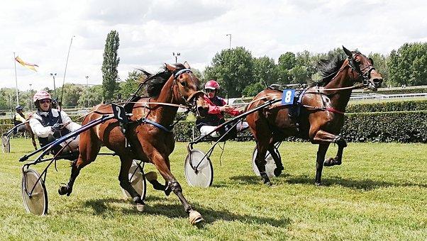 Horses, Race, Trot, Horse, Horseback Riding, Horse Show