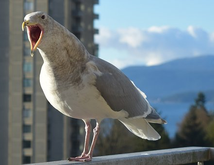 Seagull, Bird, Talking Seagull