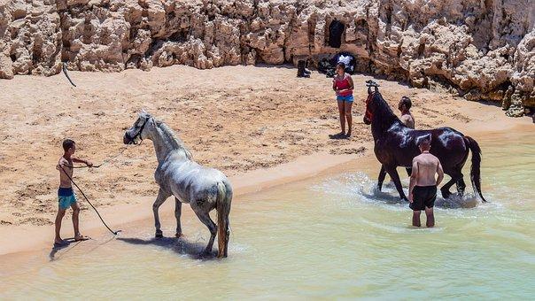Horses, Taking Bath, Bathing, Beach, Refreshing, Heat