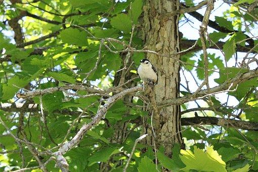 Nuthatch, White, Breasted, Wildlife, Bird, Michigan