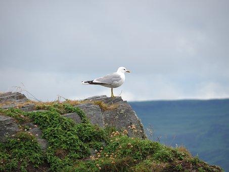 Easdale, Scotland, Holiday, Seagull, Sea, Coast, Lonely