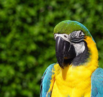 Blauara, Parrot, Bird, Feather, Colorful