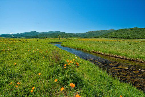 Brook, Green Valley, Flowers, Bogart Village, Mongolia